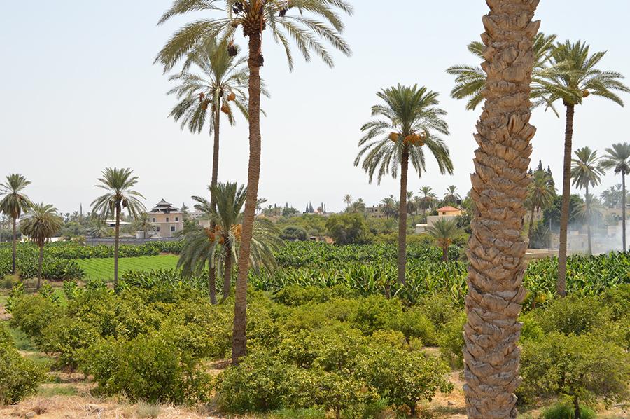 Jericho City Welcome To Palestine
