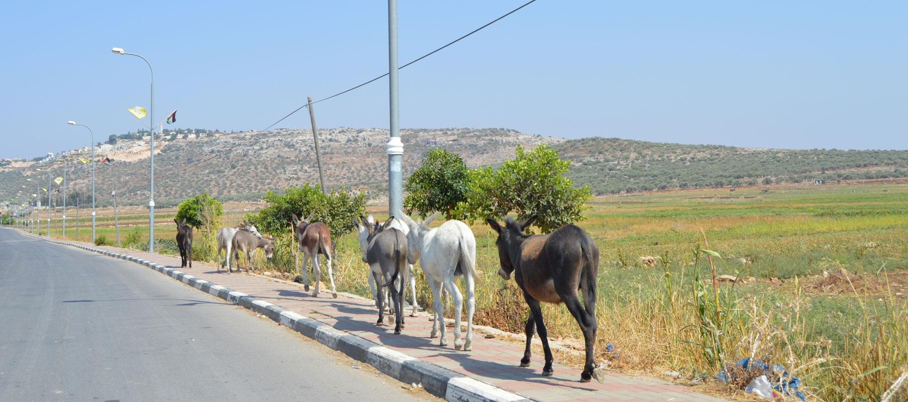 Deir Balut, Palestine