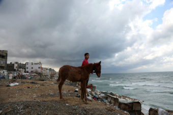 A Horse and His Boy - Mohammed Zaanoun