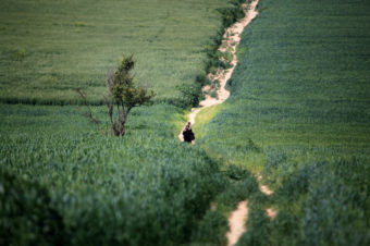 A Country Stroll - Mohammed Zaanoun